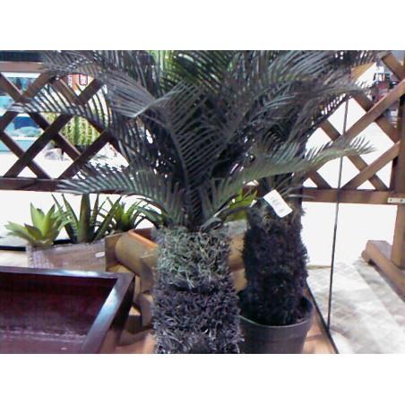 Cycas Palm 1330 H.73