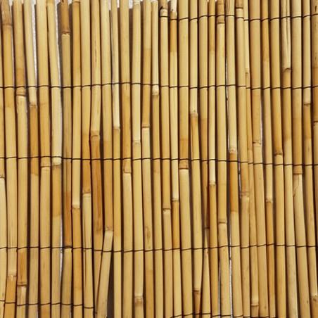 Mister Bamboo -canna D.10mm 200x300